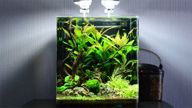 The Best Nano Tank Setups The Aquarium Guide