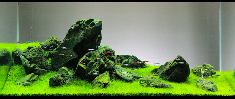 Iwagumi Style Planted Tank