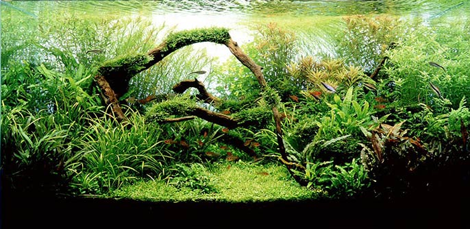 7 Aquascaping Styles For Aquariums The Aquarium Guide