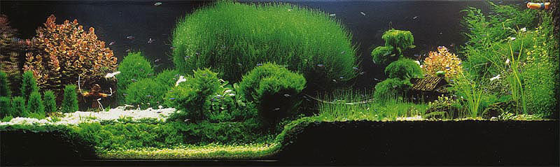 Aquascaping Styles For Aquariums The Aquarium Guide