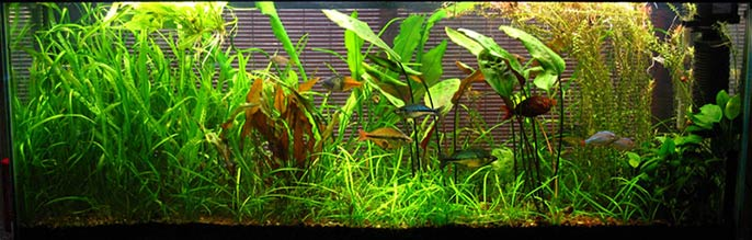 7 Aquascaping Styles for Aquariums | The Aquarium Guide