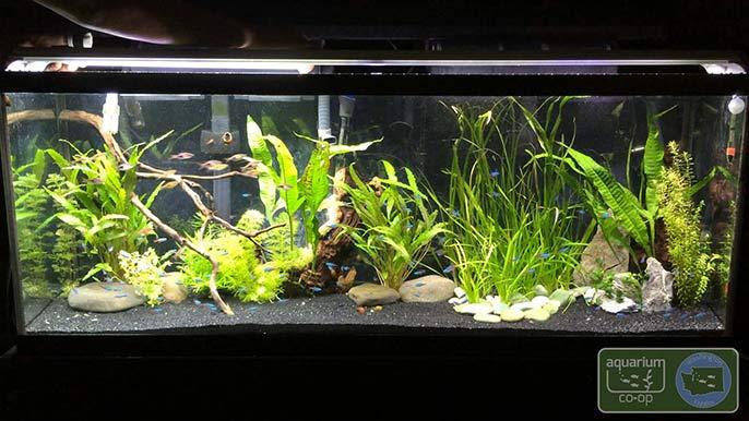 The best aquarium light for beginners for Best fish tanks for beginners