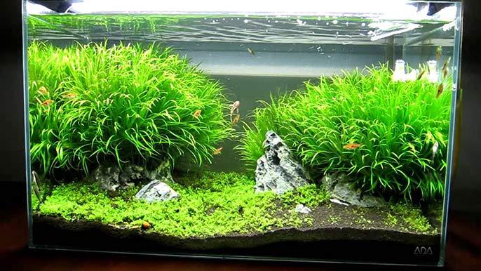 The Best Aquarium Light For Beginners
