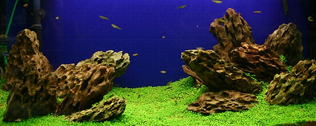 Create A Carpet In Your Planted Tank The Aquarium Guide