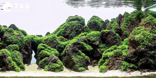 Best 29 Gallon Aquarium by Andras Peter
