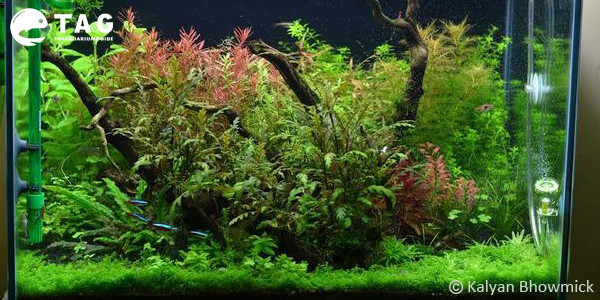 Best 29 Gallon Aquarium by Kalyan Bhowmick
