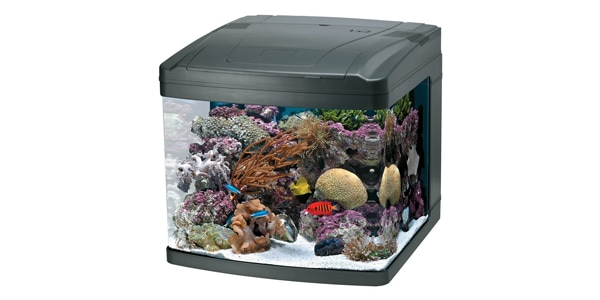 Best 29 Gallon Aquariums The Aquarium Guide