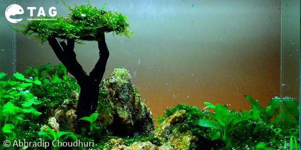 Abhradip Choudhuri Aquascaping