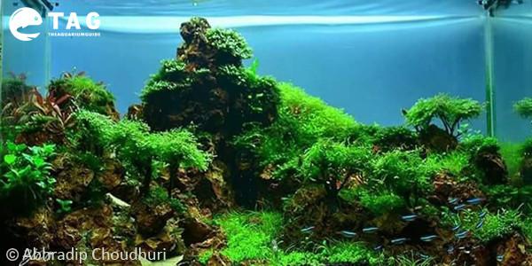 Abhradip Choudhuri Aquascape
