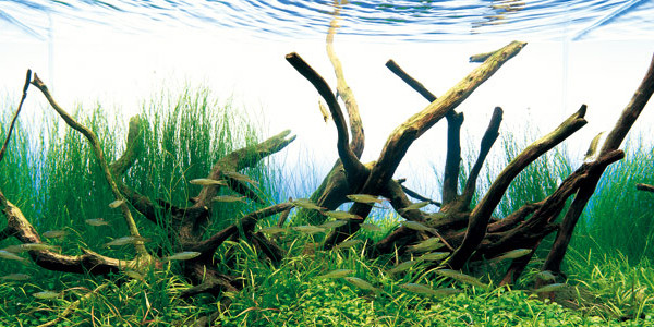Aquarium driftwood for your tank the aquarium guide for Fish tank driftwood