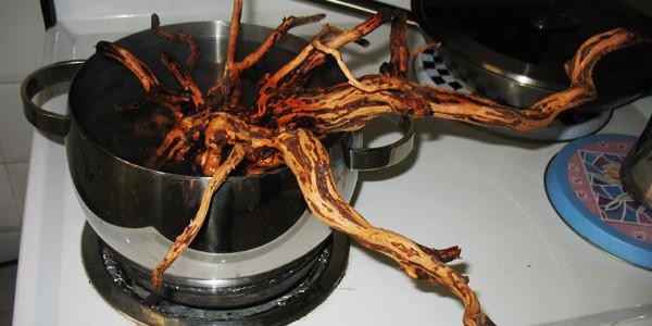 Boiling Aquarium Driftwood