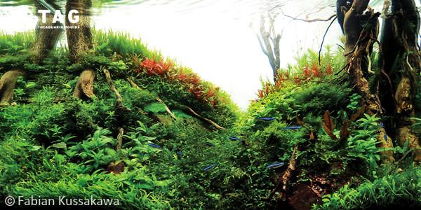 Fabian Kussakawa Nature Style Aquascape