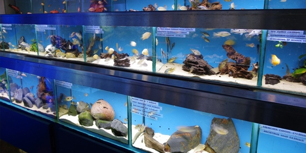Is it a good idea to get a cheap fish tank tag for Fish tank price