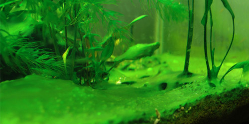 how to avoid algae in your aquarium