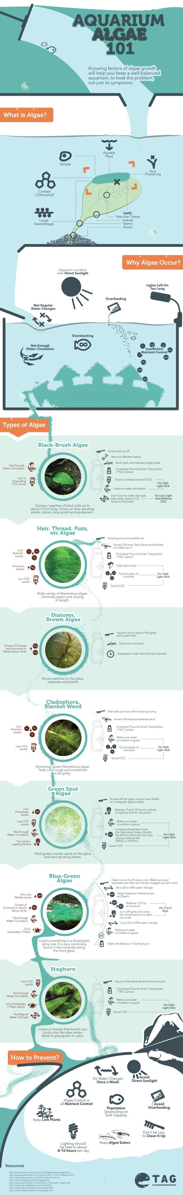 Aquarium Algae 101