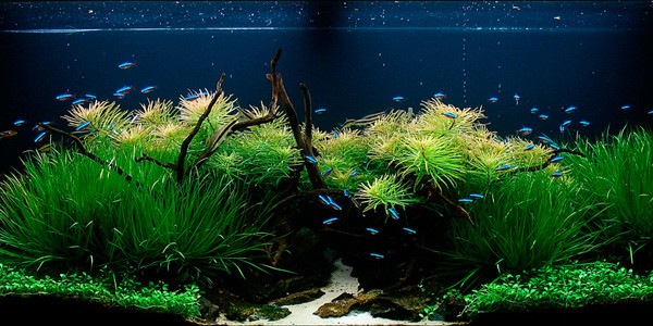 Aquascaping Nature Style