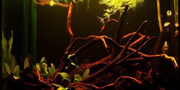 Blackwater Aquarium Best Accent Chairs And Aquarium