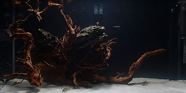 Blackwater Aquariums