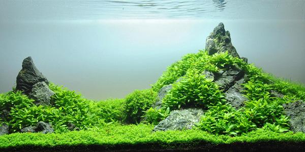 Understanding Iwagumi Aquascaping Style | The Aquarium Guide