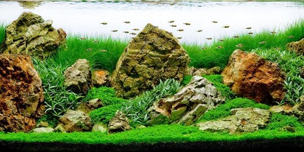 Understanding Iwagumi Aquascaping Style The Aquarium Guide