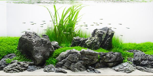 660 Koleksi Foto Aquascape Design Layout HD Paling Keren Untuk Di Contoh