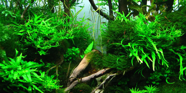 Jungle Aquascape Style