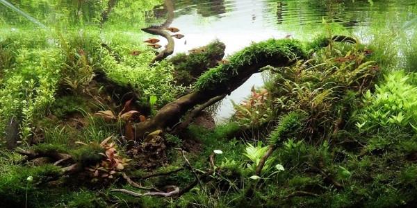 Understanding Jungle Aquascaping Style | The Aquarium Guide