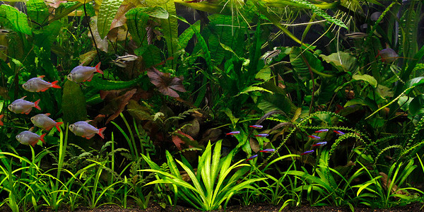 Jungle Aquascaping Styles