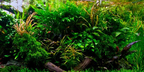 Understanding Jungle Aquascaping Style | The Aquarium Guide