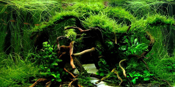 Jungle Style Aquascaping