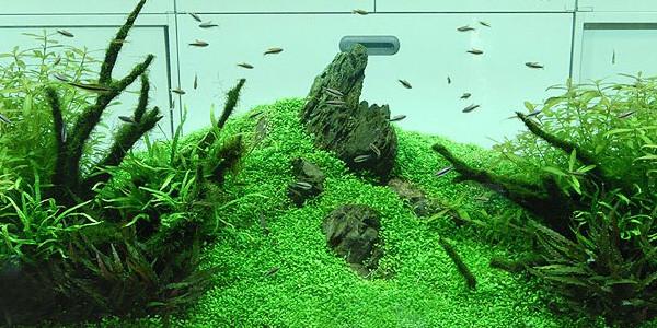 Nature aquascape style