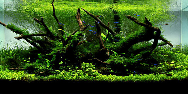 Understanding Nature Aquascaping Style The Aquarium Guide