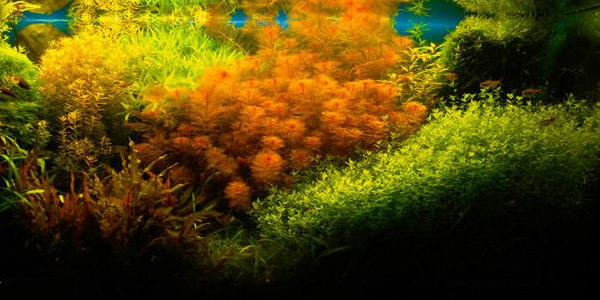 The Dutch Aquascaping Style Is Defined By Its Use Of Many Different Plants,  But It Also Distinguishes Itself From Other Aquascaping Styles Through Its  Use ...
