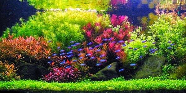 Dutch Aquascape Styles The Aquarium Guide