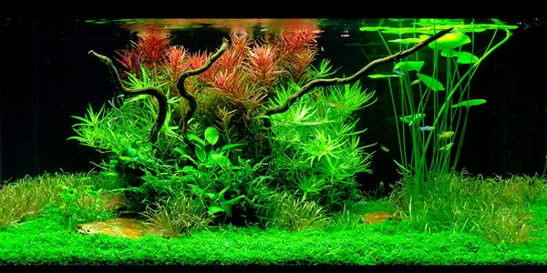 dutch aquascaping styles