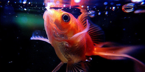 Fish Feeding Schedules