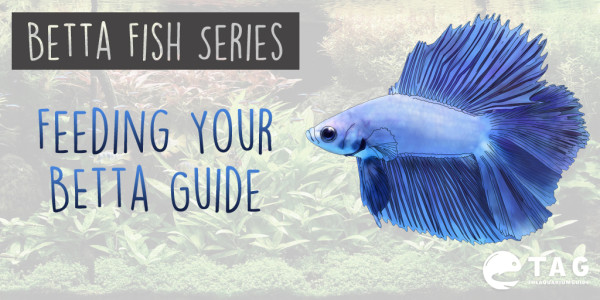 Feeding Your Betta Guide