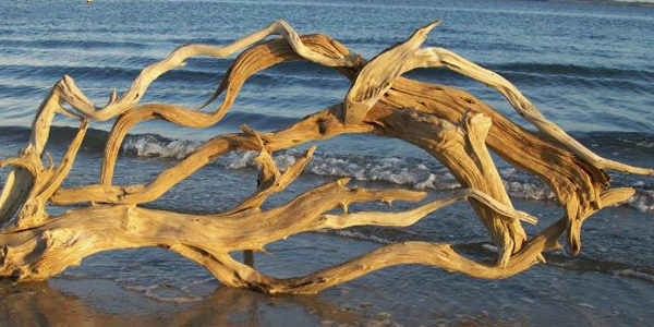 Lower the pH with driftwood