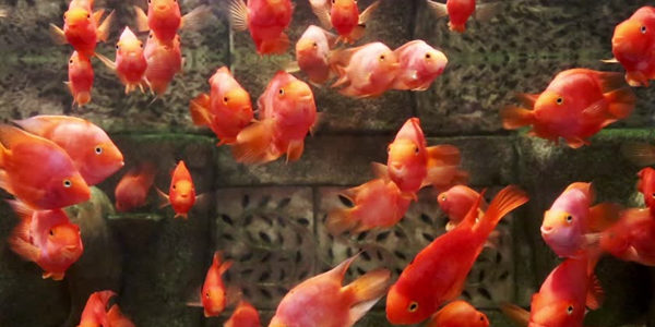 Overcrowded Aquariums