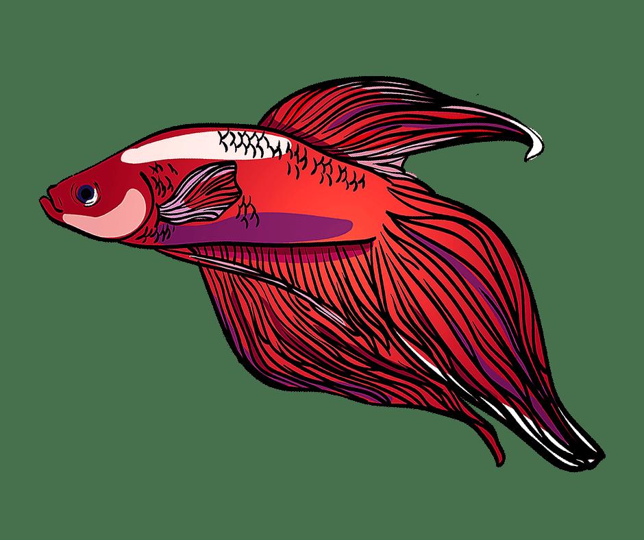 Aquarium Graphic Resources The Aquarium Guide