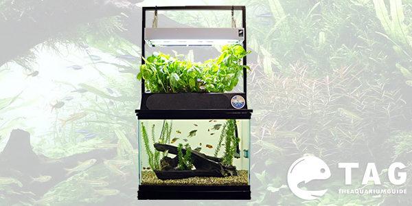 Eco cycle aquaponics kit dual t5 grow light the for Aquaponics fish tank kit