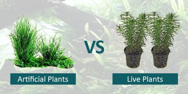 Live Plants Vs Artificial The