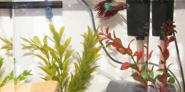 Best filter for betta fish the aquarium guide for Do betta fish need a filter