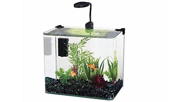Small fish tanks the aquarium guide for Small fish tanks