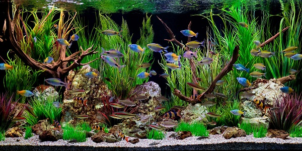 freshwater fish tank the aquarium guide