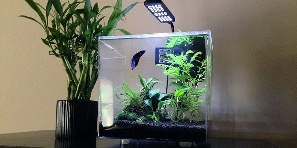 3-Gallon Cube Aquarium Kit