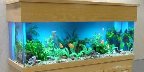 Best 100 gallon aquarium that you can buy | The Aquarium Guide