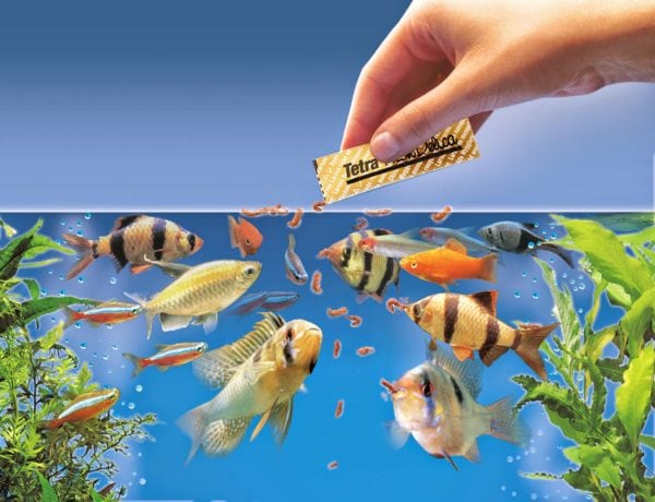 Types of aquarium fish food types and nutritional values for How to fresh water fish