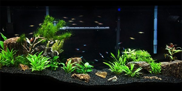 Low tech planted tank guide the aquarium guide for Low maintenance fish tank
