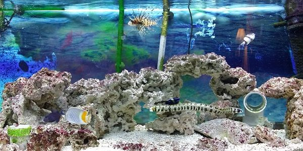 Freshwater fish tank vs saltwater fish tank the aquarium for How to keep fish tank clean without changing water